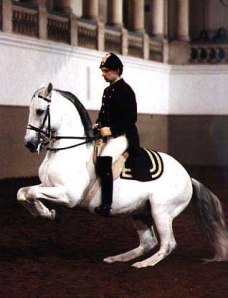 The levade is the most extreme example of the horse's legs coming under to leverage the front end upward.