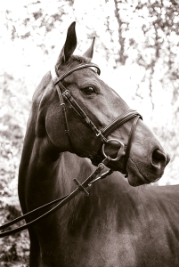horsebw
