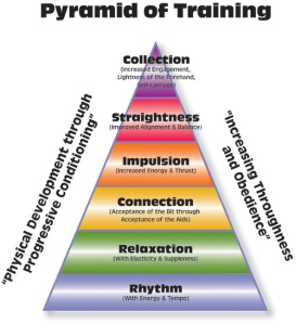 training scale