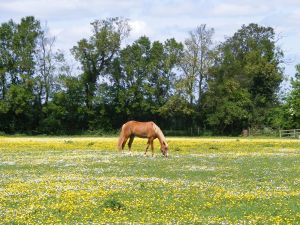 horse meadow