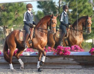 Perhaps in twenty years the dressage competitor will look more like this.