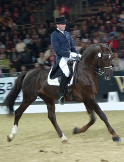 dressage shadbelly